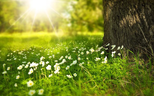 Jetzt kommt der Frühling!